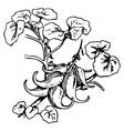 plant devils claw vector image vector image