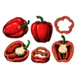Pepper hand drawn set Vegetable Isolated vector image vector image