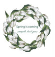 spring wreath with white tulip flowers vector image vector image