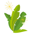 vegan product rucola or fennel harvest vector image vector image