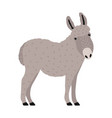 amusing grey donkey ass or burro isolated vector image vector image