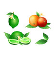 lime and orange citrus fruits vector image vector image