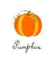 Pumpkin vegetable isolated on vector image