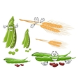 Wheat ears fresh pea and bean vegetables vector image