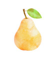 watercolor pear fruit with leaf on white vector image