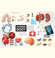 cartoon human body anatomy infographics vector image vector image