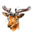 colored hand sketch of a young deer vector image vector image