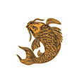 Koi Nishikigoi Carp Fish Jumping Etching vector image vector image