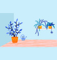 pottery plants houseplants flat vector image