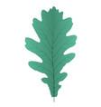 naturalistic autumn oak leaves on white vector image