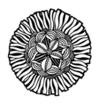 hand drawn doodle flower vector image vector image
