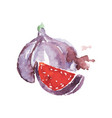 ripe fig fruit watercolor hand painting vector image