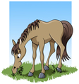 Eating horse vector image vector image