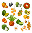 exotic tropical fruits icons vector image vector image