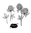 Clover flower drawing set isolated wild