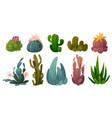 set of cactus desert cacti flowers vector image