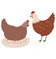 chickens flat vector image