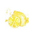 juicy ripe lemon fruit watercolor hand painting vector image