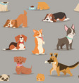 Different dogs breed cute puppy characters