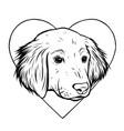 portrait labrador retriever vector image
