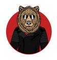 bear portrait vector image