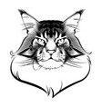 maine coon cat ink graphic rendered in tat vector image