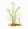 stems of asparagus on a white background vector image vector image