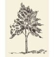 Young tree vintage hand drawn sketch vector image vector image