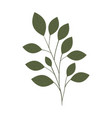 branch with isolated icon vector image vector image
