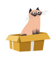 cat in box siamese breed and cardboard container vector image vector image