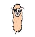 hand drawn peru animal alpaca vicuna vector image vector image