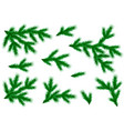 realistic branches of spruce and pine set for vector image vector image