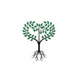 tree root logo vector image vector image