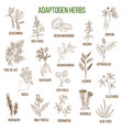 adaptogen herbs hand drawn set of medicinal vector image vector image