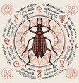 banner with hand drawn beetle and magic symbols vector image vector image
