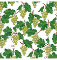 grape seamless pattern wine yard natural fruit vector image vector image