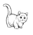 little cat hand drawn vector image vector image