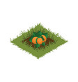 isometric cartoon vegetable garden bed planted vector image vector image