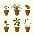 Plants in flowerpots vector image vector image