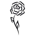 rose tattoo on white background vector image
