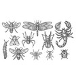 set insect sketch vintage drawing bugs vector image