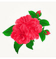 camellia japonica red flowers with buds vintage vector image vector image