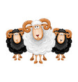 cartoon sheep set vector image