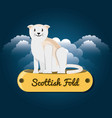 cat scottish foll under the light of the moon vector image