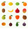 Color fruits vector image