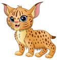cute cartoon bobcat vector image