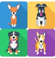 dog icon flat design vector image vector image