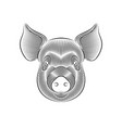 engraving stylized pig portrait on white vector image