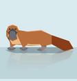 flat design platypus vector image vector image