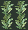green tropical banana palm leaves and branches vector image vector image